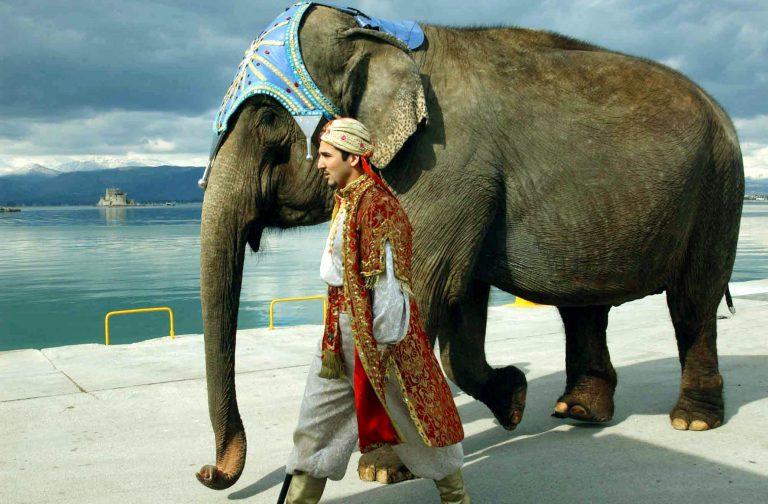 Ανακαλύφθηκαν δύο είδη αφρικανικού ελέφαντα! | Newsit.gr