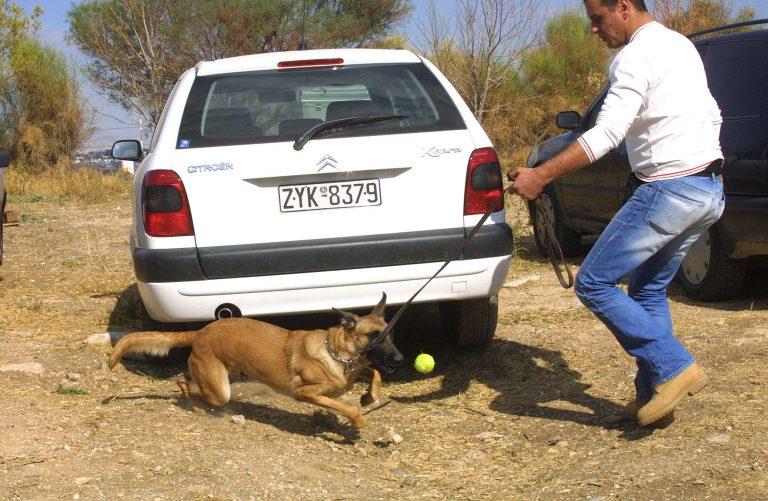Αλεξανδρούπολη: Σκύλος της αστυνομίας ξετρύπωσε 12 κιλά χασίς! | Newsit.gr