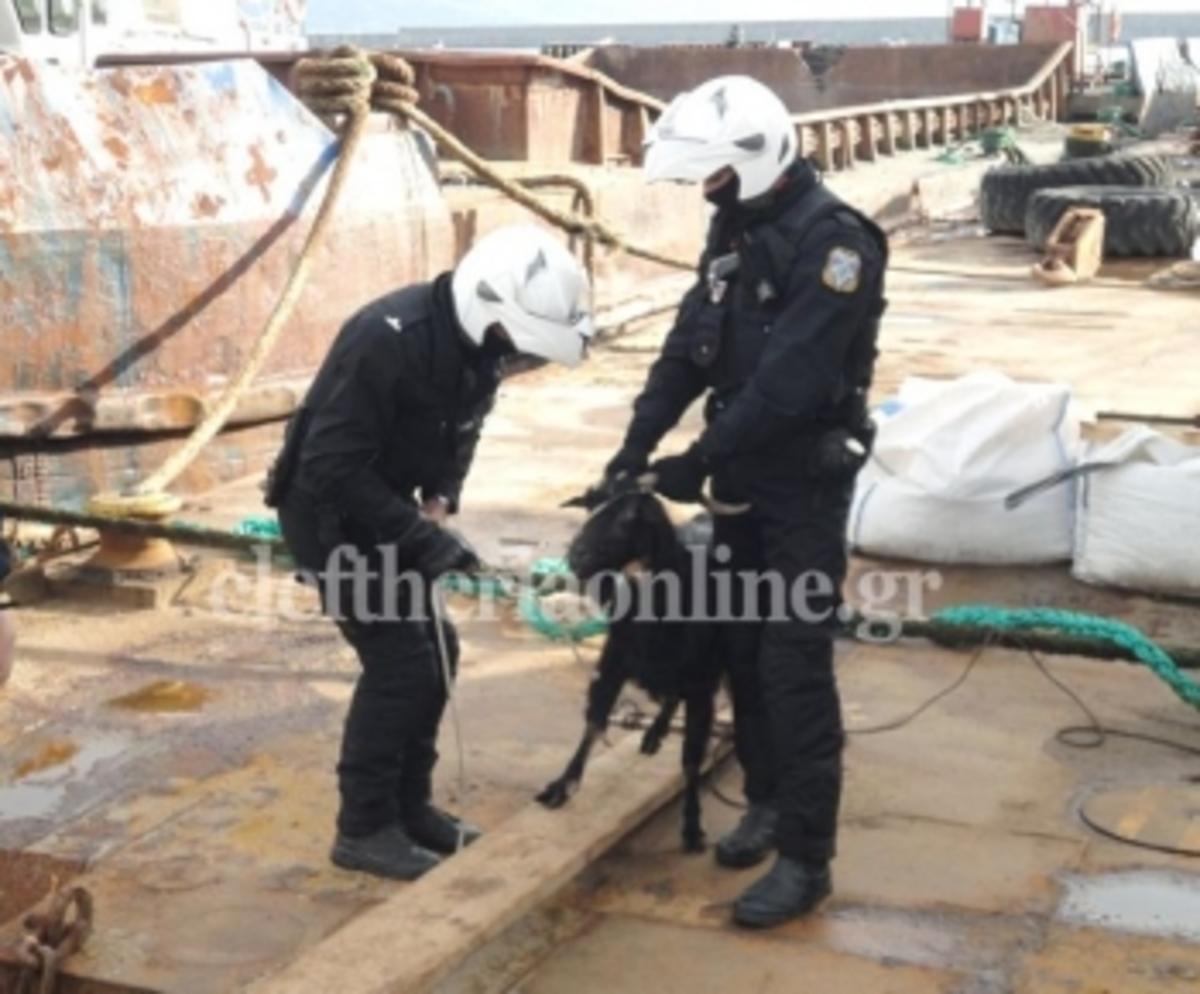 Καλαμάτα:Μια σύλληψη… ξεκαρδιστική – Τι νομίζετε ότι κάνουν οι άνδρες της ΔΙΑΣ; | Newsit.gr