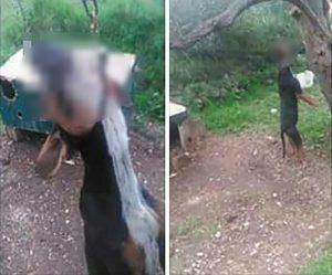 Θεσπρωτία: Κρέμασαν σκύλο σε δέντρο – Οι σκληρές εικόνες και τα μηνύματα οργής [pics]