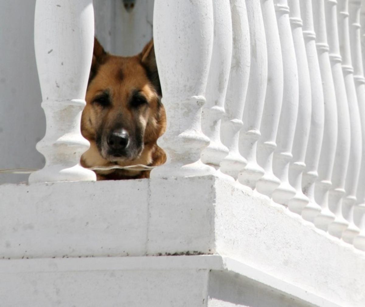 Βόλος: Ο αγαπημένος του σκύλος τον έβαλε σε περιπέτειες – Σύλληψη λίγο πριν τα Χριστούγεννα! | Newsit.gr