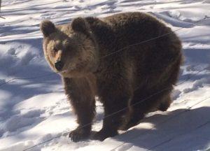 Καιρός: Είδαν χιόνι και… πήγαν για ύπνο οι αρκούδες στο Νυμφαίο της Φλώρινας [pics]