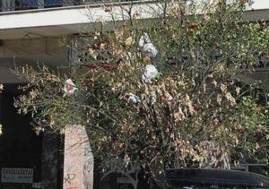 Θεσσαλονίκη: Δέντρο αντί για φύλλα έχει σκουπίδια – Η απίθανη εξήγηση και οι εικόνες που σαρώνουν το διαδίκτυο [pics]