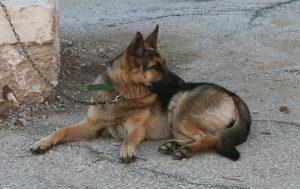 Χανιά: Επιθέσεις από αδέσποτα σκυλιά – Τραυματίστηκε οδηγός μηχανής σε πάρκο!