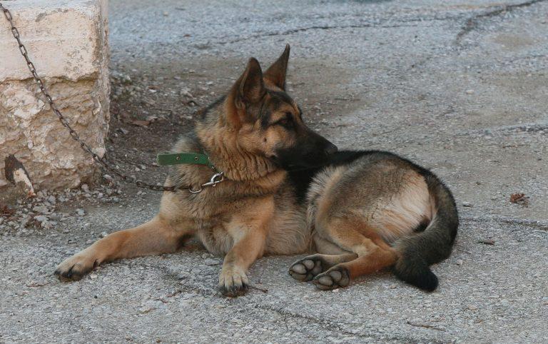 Πίνδος: Χάρισαν ελληνικούς ποιμενικούς σε κτηνοτρόφους για την προστασία των κοπαδιών! | Newsit.gr