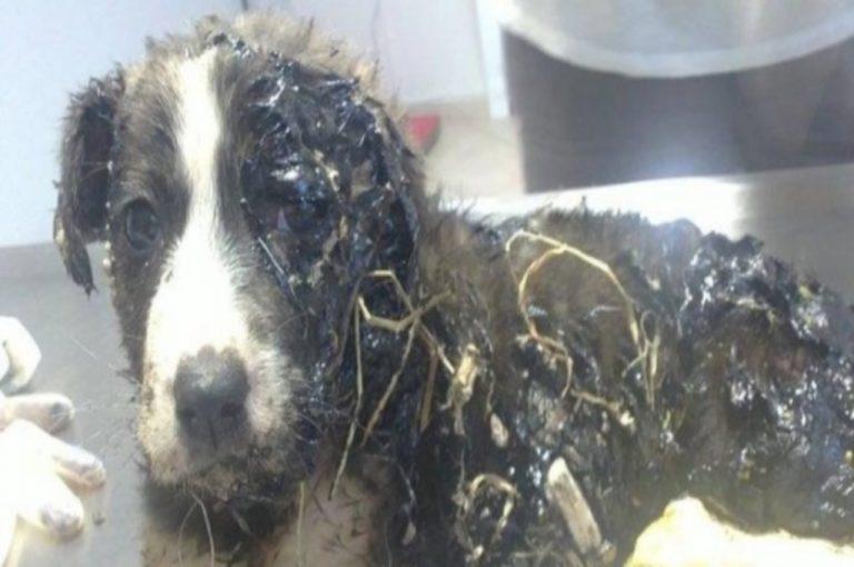 Φρικτό θάνατο σε καυτή πίσσα βρήκαν δύο σκυλάκια στο Ηράκλειο | Newsit.gr