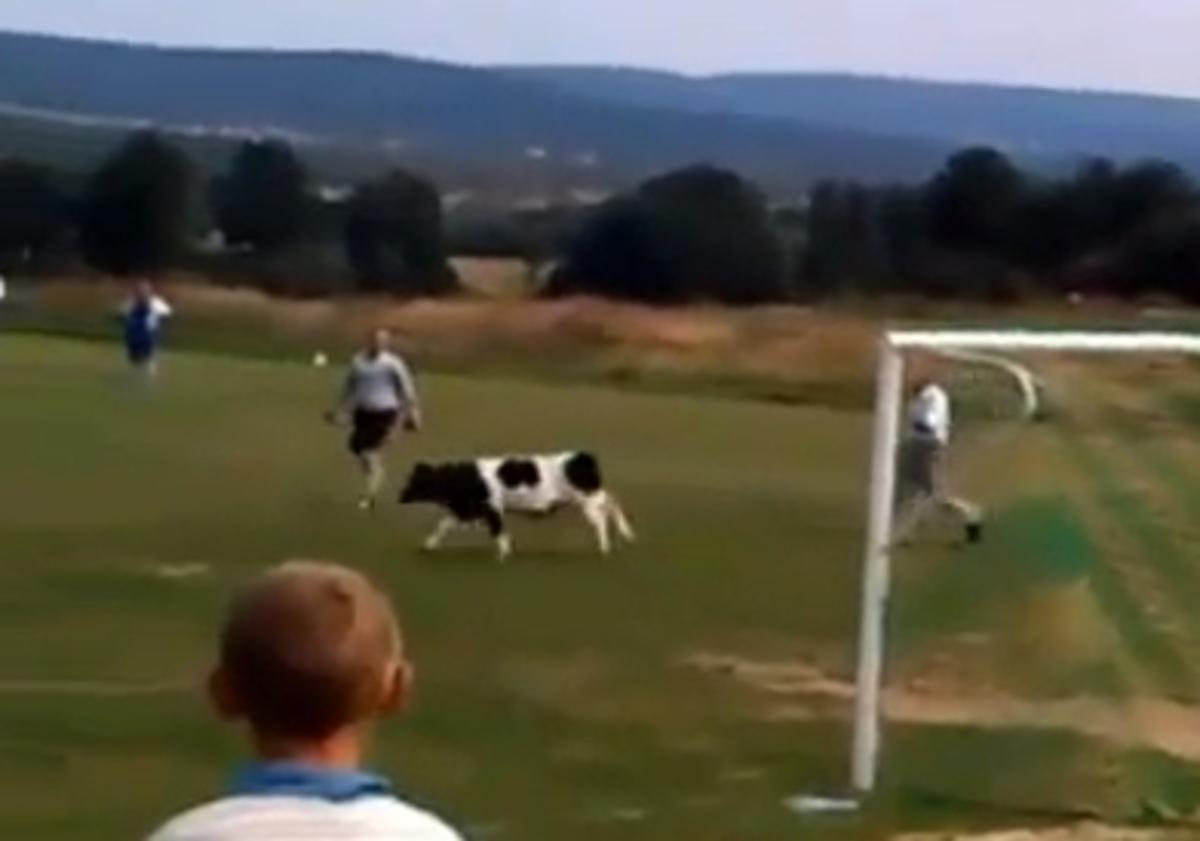 Εισβολή αγελάδας σε γήπεδο – Δείτε το ΒΙΝΤΕΟ | Newsit.gr