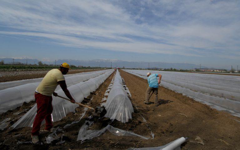 Έτσι θα ελέγχουν τις τιμές των αγροτικών προϊόντων | Newsit.gr