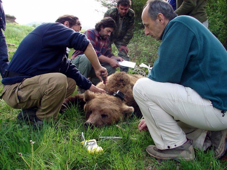 Καστοριά: Σώες η μαμά αρκούδα και τα δύο αρκουδάκια   Newsit.gr