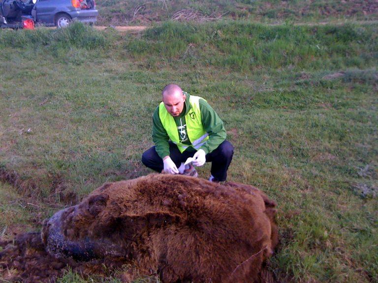 Κοζάνη: Νεκρή αρσενική αρκούδα | Newsit.gr