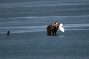 Καστοριά: Το αρκουδάκι επέστρεψε! Νέα βόλτα και… πικνίκ στην παγωμένη λίμνη [pics, vid]
