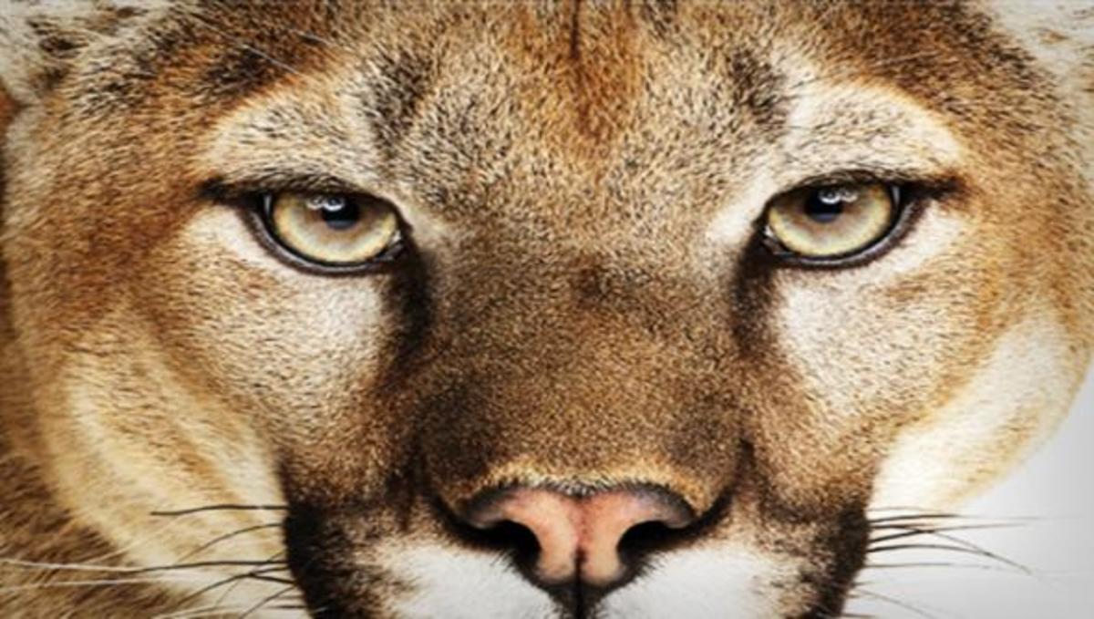 Ευρέως διαδεδομένο το λειτουργικό Mountain Lion της Αpple | Newsit.gr
