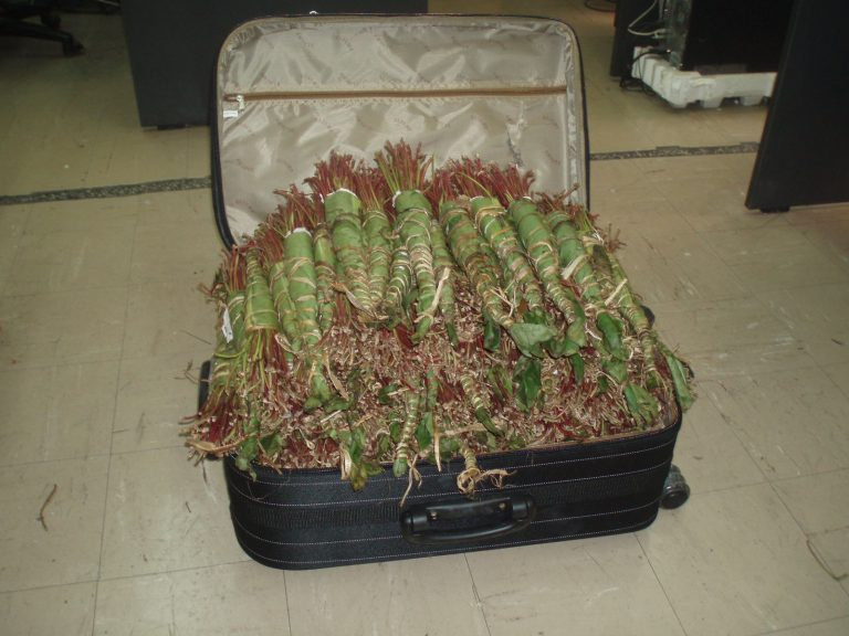 Είχε 20 κιλά ναρκωτικά στην βαλίτσα της | Newsit.gr