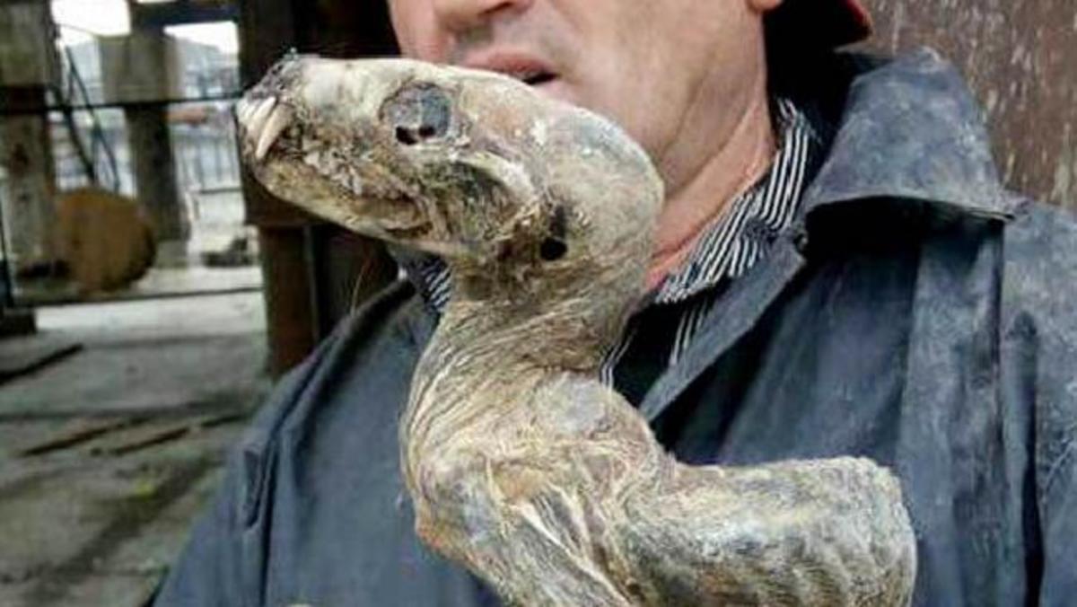 Ανακάλυψαν εφιαλτικό μουμιοποιημένο πλάσμα στη Σιβηρία