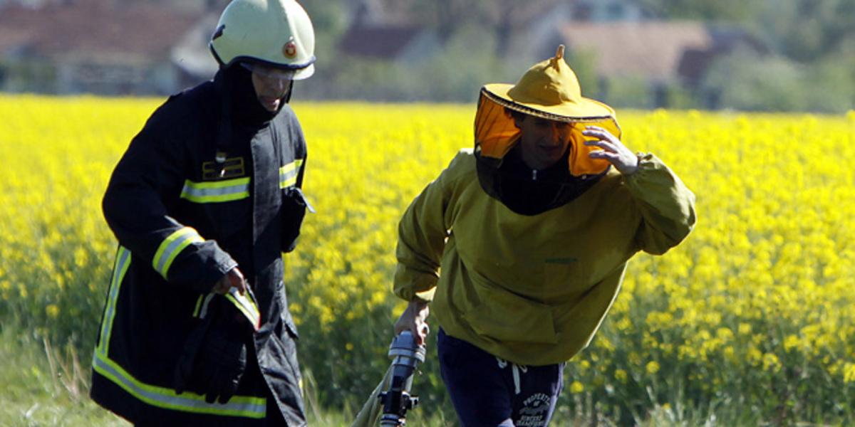74χρονη πέθανε μετά από επίθεση σμήνους μελισσών | Newsit.gr