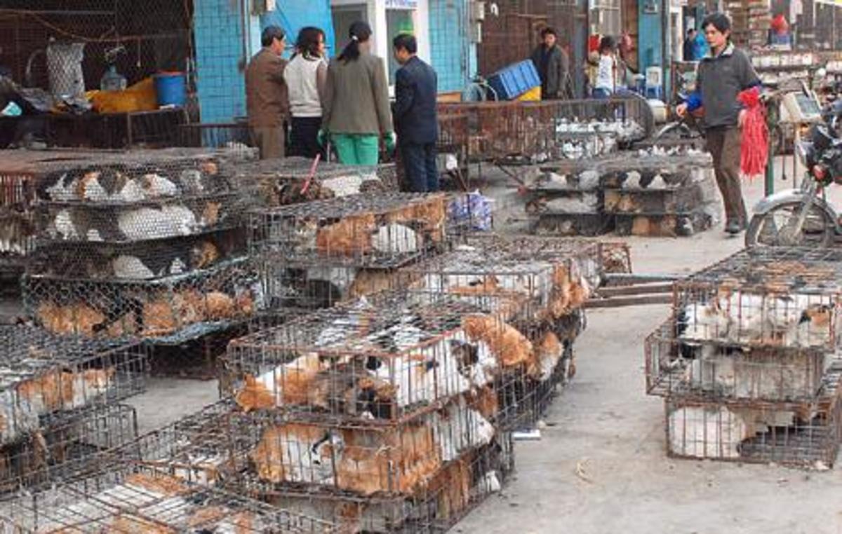 Θα πάψουν οι κινέζοι να τρώνε γάτες και σκύλους; | Newsit.gr