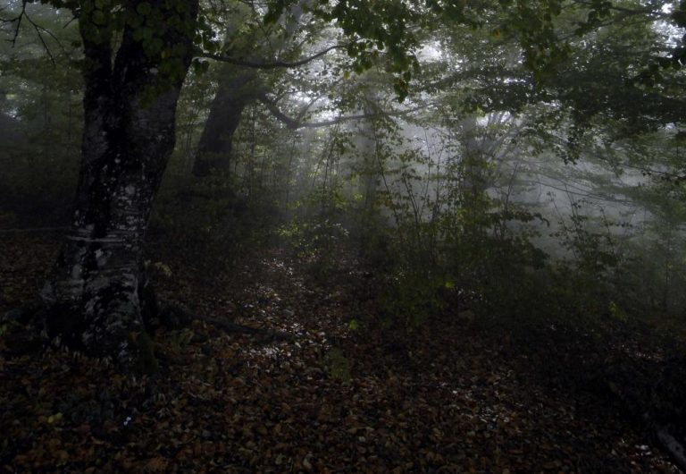 Ιωάννινα: Οι «σκιές» στο δάσος κουβαλούσαν… 325 κιλά χασίς!   Newsit.gr