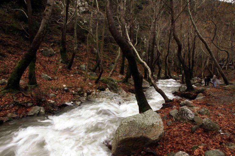 Ήπειρος: Χάθηκε στο δάσος Αλβανός κακοποιός! | Newsit.gr
