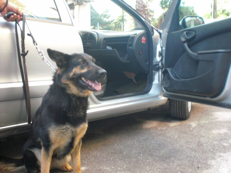 Εύβοια:Ο σκύλος που… μυρίστηκε το ένοχο μυστικό των δύο Αλβανών! | Newsit.gr