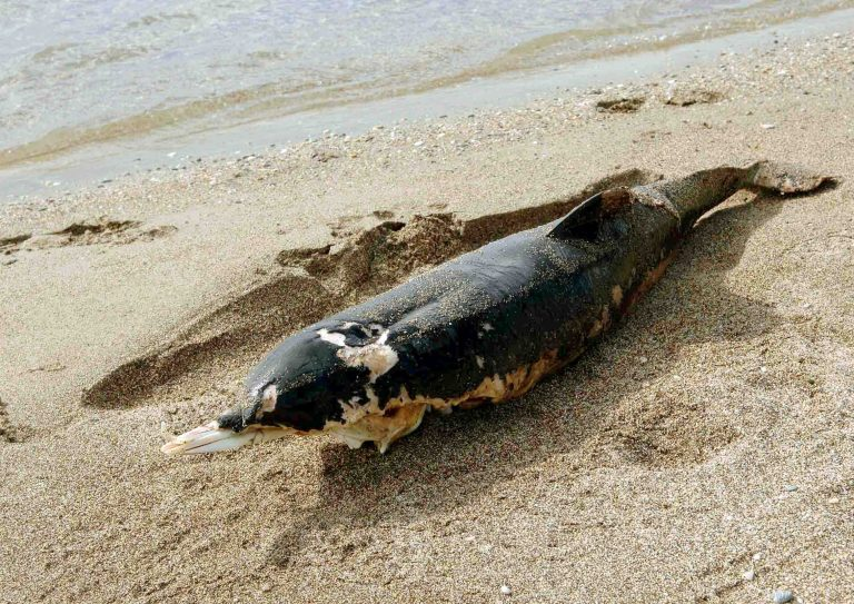 Νεκρές χελώνες και δελφίνια | Newsit.gr