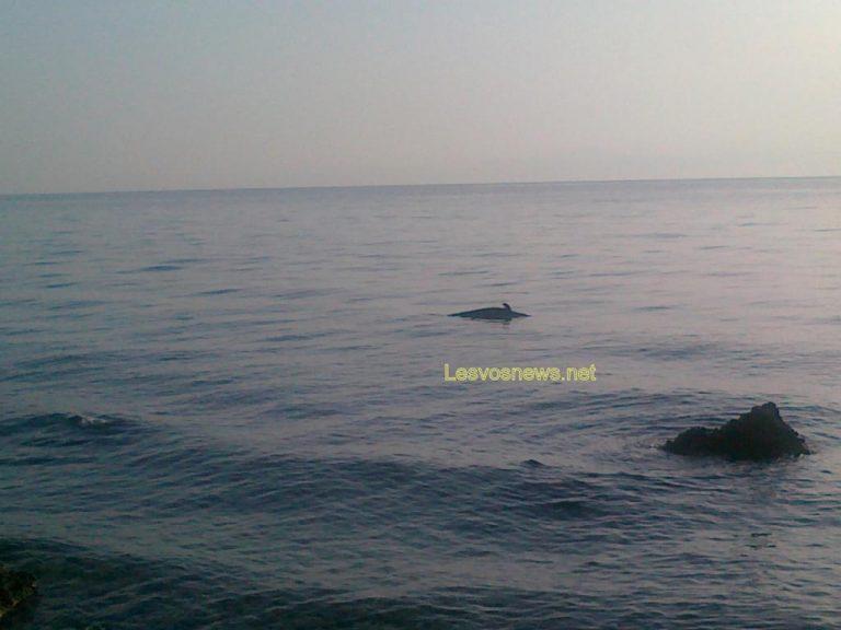 Νεκρό δελφίνι στη Μυτιλήνη – ΦΩΤΟ | Newsit.gr