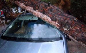 Τρόμος για τουρίστες στα Χανιά – Δέντρο έπεσε στο αυτοκίνητό τους!