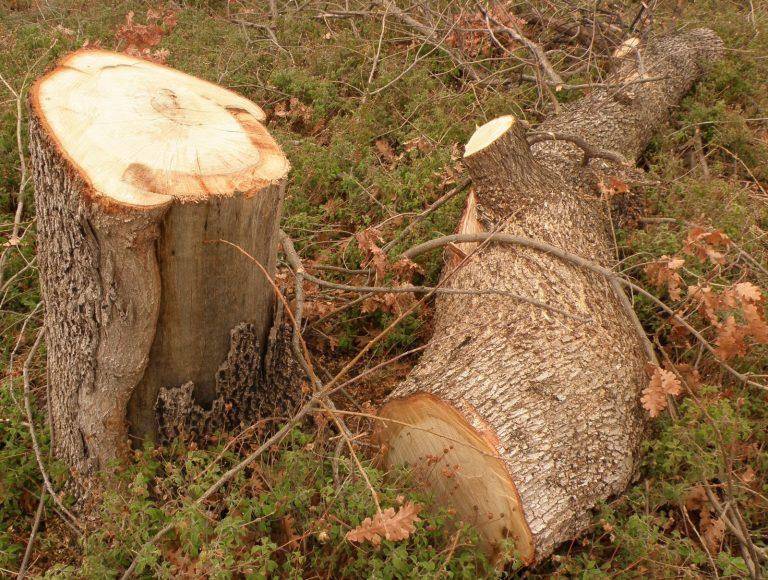 Γρεβενά: Τον σκότωσε το δέντρο που έκοψε! | Newsit.gr
