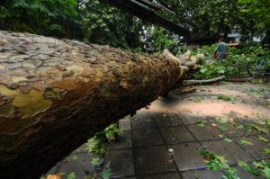 Σοκ στην Εύβοια – Δέντρο καταπλάκωσε πυροσβέστη – Θρήνος για τον πολύτεκνο πατέρα
