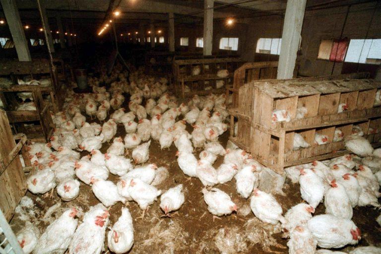 Τι είπε στο Newsit ο Πρόεδρος του ΕΦΕΤ για τις διοξίνες σε αβγά και ζωοτροφές – Δεν είναι ακόμα σίγουροι οι Γερμανοί αν έχουν γίνει εξαγωγές! | Newsit.gr