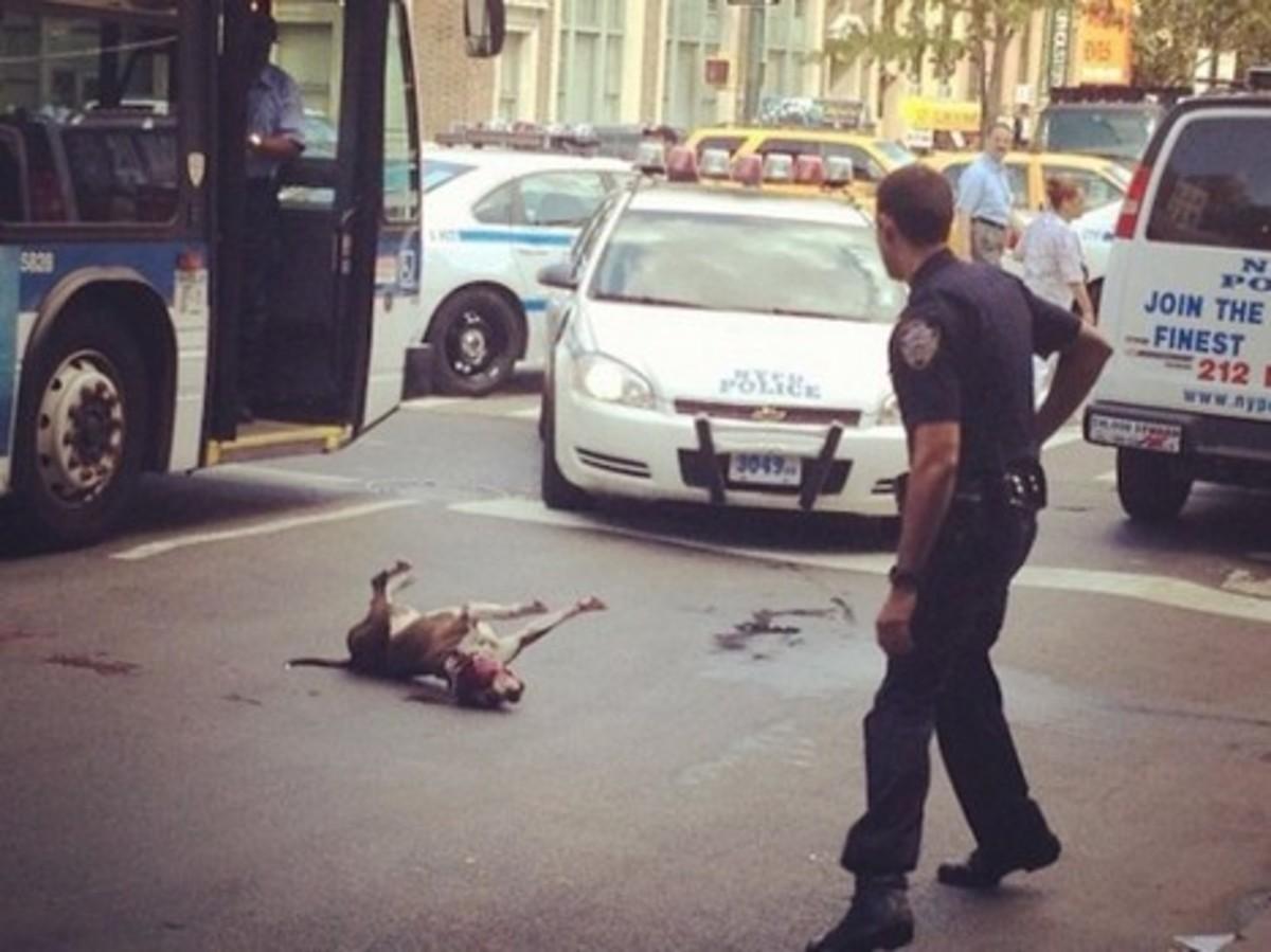 Βίντεο σοκ: Αστυνομικός πυροβόλησε εν ψυχρώ σκύλο άστεγου! | Newsit.gr