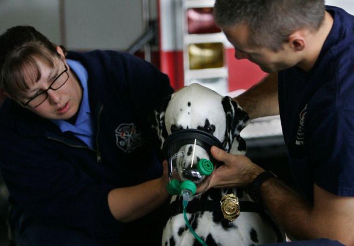 Μάσκες οξυγόνου και για τα…. κατοικίδια | Newsit.gr