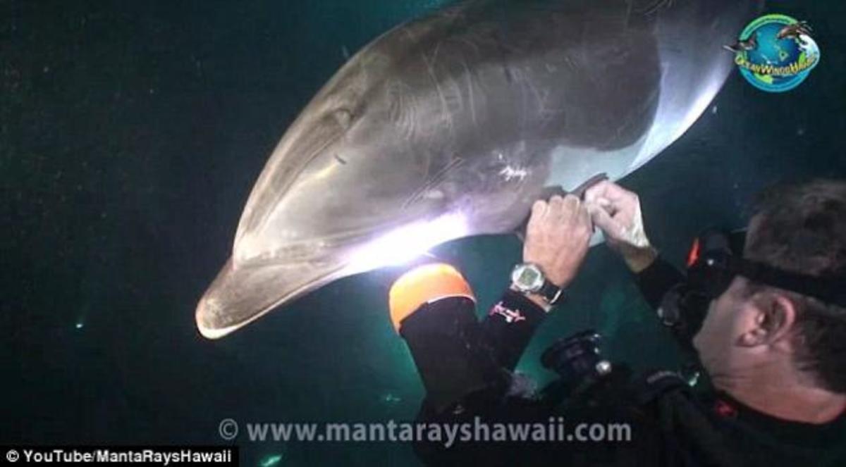ΒΙΝΤΕΟ: Η στιγμή που ενα δελφίνι ζητα βοήθεια απο ενα δύτη   Newsit.gr