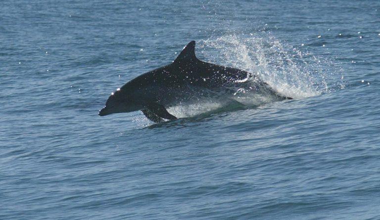 Τα δελφίνια έχουν προσωπικότητα και πολιτισμό   Newsit.gr