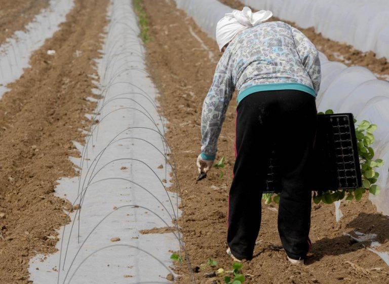 Σύγχρονοι σκλάβοι στην Αργολίδα! Τους «φυλάκισαν»σε στάβλο και τους έβαζαν να δουλεύουν ασταμάτητα! – 4 συλλήψεις δουλεμπόρων | Newsit.gr