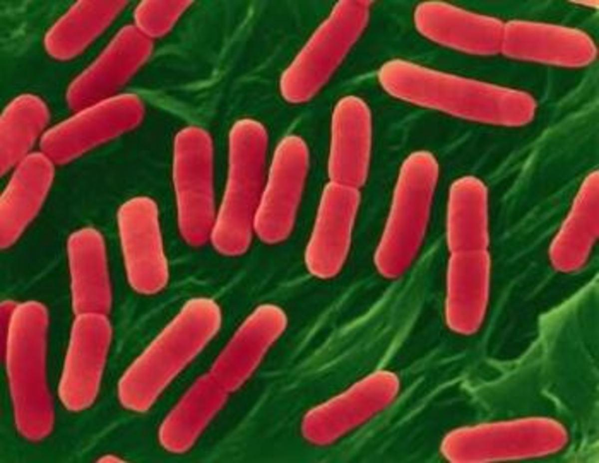 Δύο επιδημίες τρομάζουν την Ευρώπη | Newsit.gr