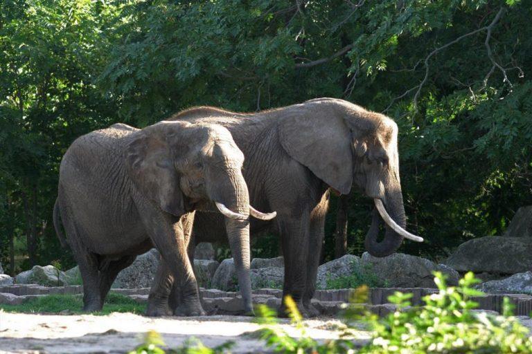 100 νεκροί ελέφαντες βρέθηκαν σε εθνικό πάρκο στο Καμερούν | Newsit.gr