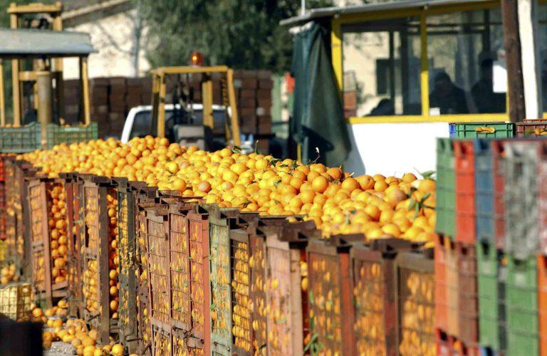 Αποζημιώσεις ΕΛΓΑ σε παραγωγούς | Newsit.gr
