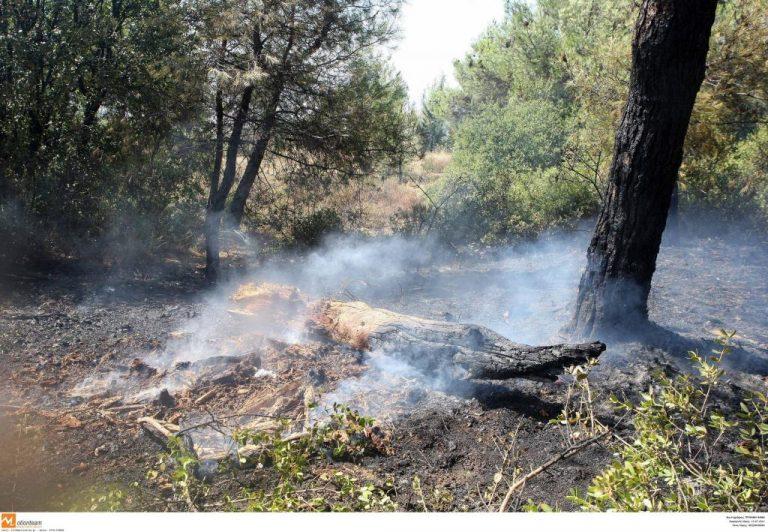 Σε εξέλιξη η φωτιά στην Κω – Εκκενώθηκαν ξενοδοχεία – Φωτιά και στη Ρόδο!   Newsit.gr