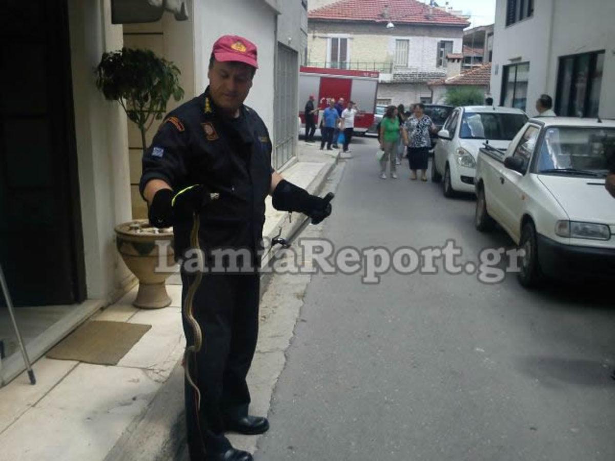 Λαμία: Δεν προλαβαίνουν τα φίδια μέσα στη πόλη | Newsit.gr
