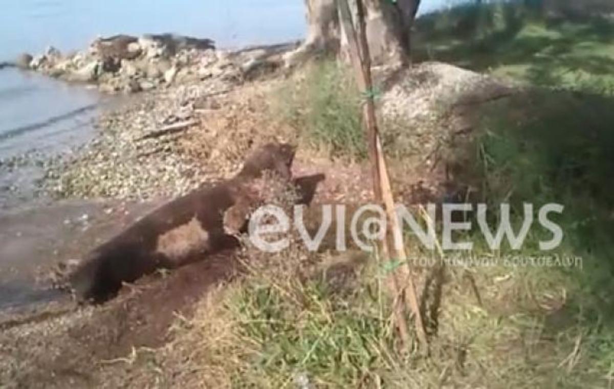 Εύβοια: Φώκια βγήκε στην ακτή και έκανε παιχνίδια – ΒΙΝΤΕΟ   Newsit.gr
