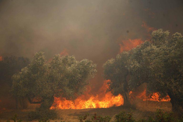Υπο μερικό έλεγχο οι φωτιές σε Ζάκυνθο και Θήβα | Newsit.gr