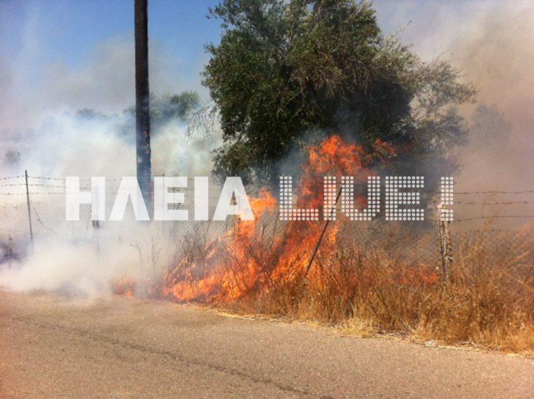 Πύργος: Φωτιά »γλείφει» αυλές σπιτιών – Δείτε το βίντεο! | Newsit.gr