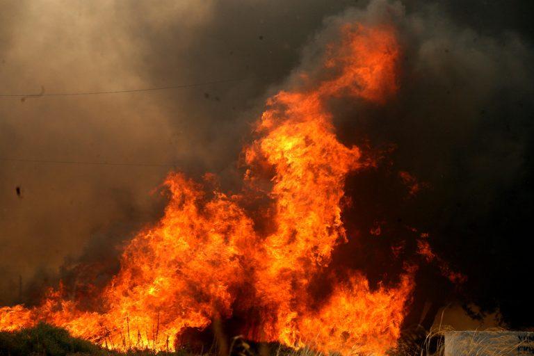 Στάχτη εκατοντάδες στρέμματα από βοσκό που έκαιγε κλαδιά | Newsit.gr