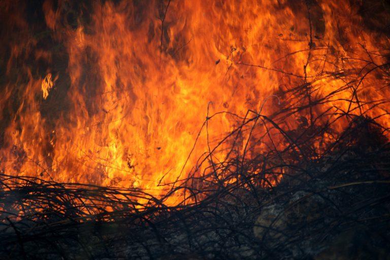 Διπλή φωτιά στο Γοργοπόταμο «φωνάζει» εμπρησμό | Newsit.gr