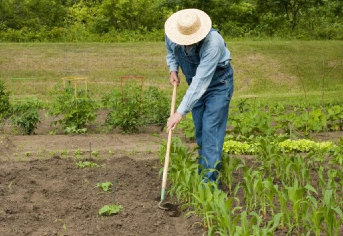 Πάρος: Ο Αλβανός κηπουρός ήταν… καταζητούμενος δολοφόνος!   Newsit.gr