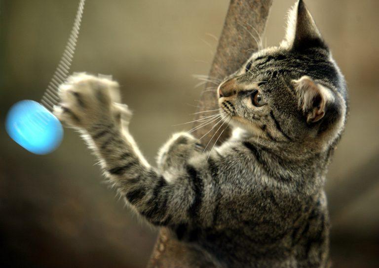 Έχετε γάτα; Μήπως έχετε και αλλεργία; | Newsit.gr