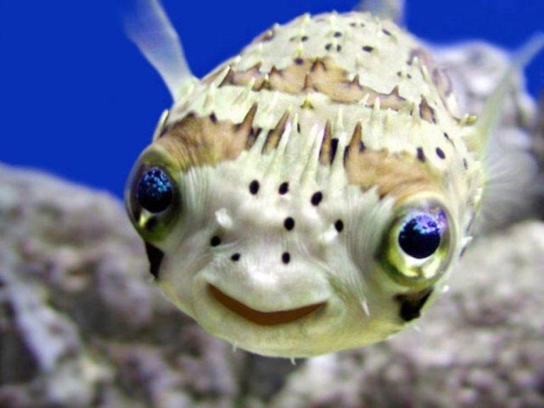 Αστείες φάτσες από σπάνια ψάρια! Δείτε φωτογραφίες   Newsit.gr