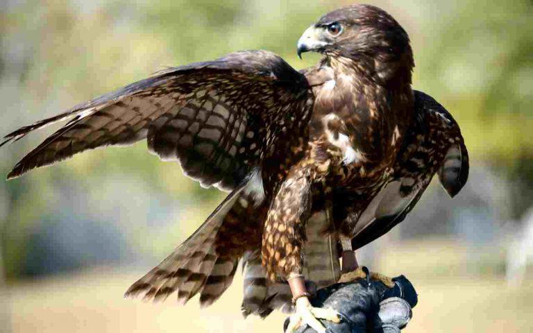 Γεράκια υπηρετούν στην Πολεμική Αεροπορία! | Newsit.gr