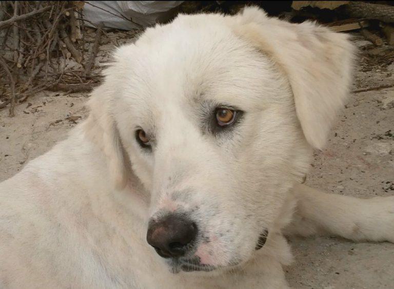Παγκόσμια Ημέρα των Ζώων . Ο σκύλος σας τι άποψη έχει;   Newsit.gr