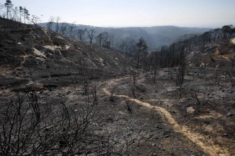 42 οι νεκροί από την φωτιά στο Ισραήλ   Newsit.gr